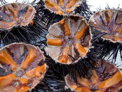 cau-gai-sea-urchin-400x300