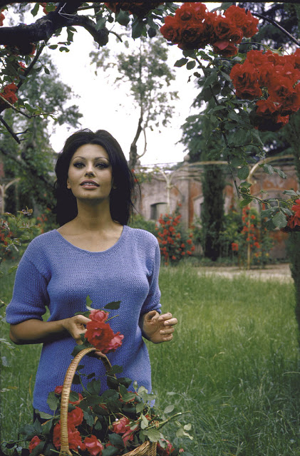 Sophia Loren in the garden cutting roses.  (Photo by Alfred Eisenstaedt//Time Life Pictures/Getty Images)