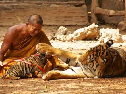 cw-tiger-temple