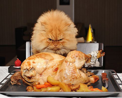 can-cats-eat-turkey-insert