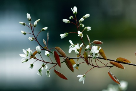 flowers-1010726_960_720